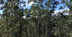 Sítio Maravilhoso, com 4,7 hectares e a 1km do centro de Rancho Queimado.