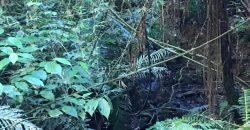 Sítio de 16 Hectares Distrito de Taquaras Localidade do Rio Pequeno – SC