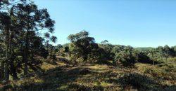 Terreno Especial para Investidores próximo ao Centro de Rancho Queimado – SC